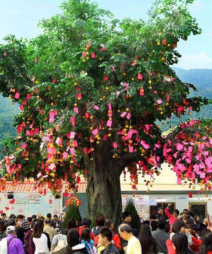 Lam Tsuen Wishing Tree in Hong Kong